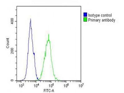 IL12_2 Antibody