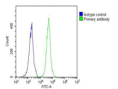 NETO2 Antibody