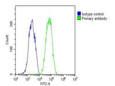 AHSG Antibody