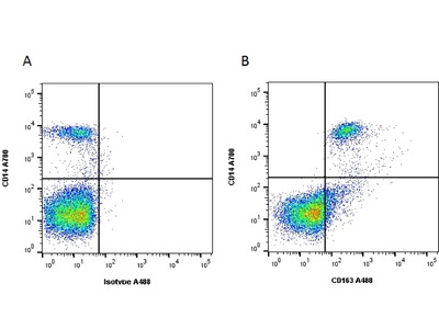 MOUSE ANTI HUMAN CD163 From Bio Rad Formerly AbD Serotec