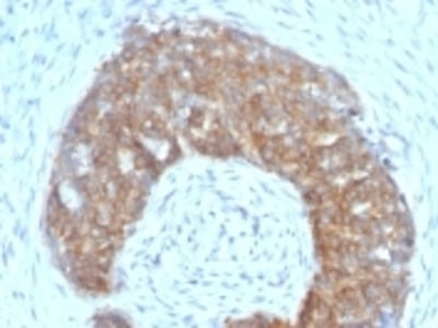 Anti-pS2 / pNR-2 / Trefoil Factor 1 (Estrogen-Regulated Protein) Monoclonal Antibody
