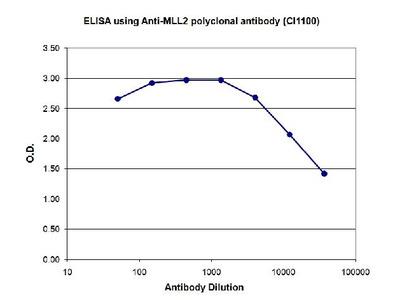 Anti-Mll2 Antibody ChIP Grade
