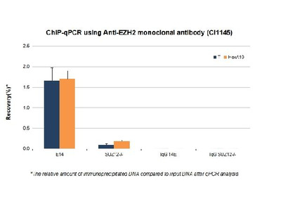 Anti-EZH2 Antibody (Monoclonal)