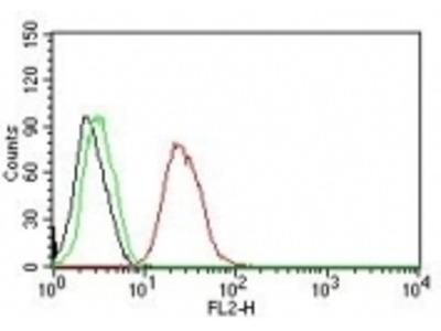 Anti-ER-beta1 (Estrogen Receptor beta-1) ESR2 Monoclonal Antibody