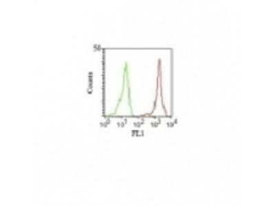 Anti-CD11a / Integrin alphaL / LFA-1 alpha Chain Monoclonal Antibody