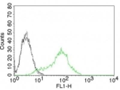 Anti-Ku (p70/p80) (Nuclear Marker) Monoclonal Antibody