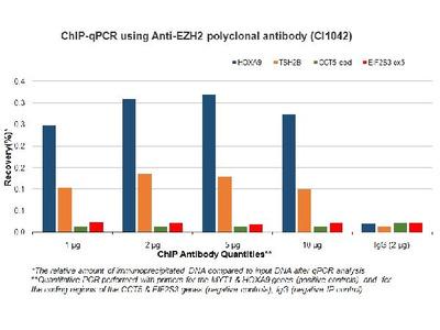 Anti-EZH2/Kmt6 Antibody