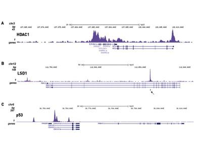 ChIP-seq Kit For Transcription Factors (High Sensitivity)