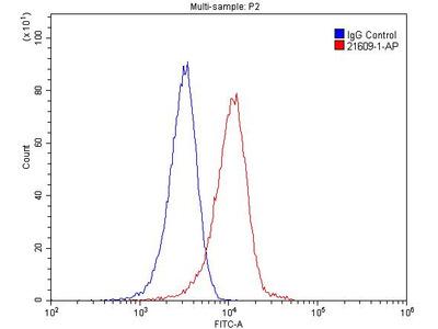 IL1RAPL1 antibody