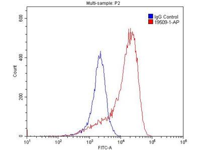 EDG7-Specific antibody