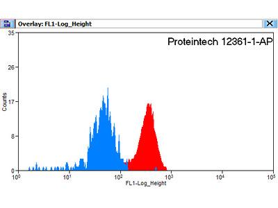 Hemoglobin epsilon antibody