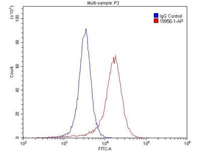 mGluR2 antibody