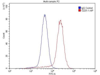 NT5E/CD73 antibody