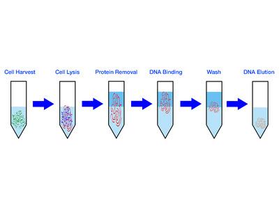 Genomic DNA Extraction Kit - Soil - 50 Columns