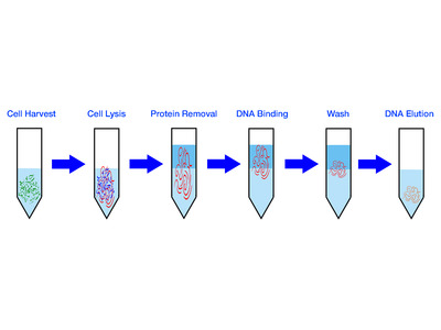 Genomic DNA Extraction Kit - Stool - 50 Columns