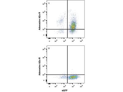 Adenosine A2aR Antibody