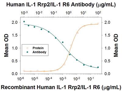 IL-1 Rrp2 / IL-1 R6 Antibody