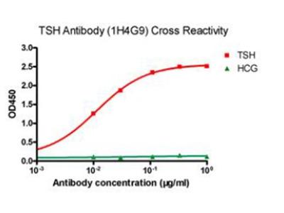 Anti-TSH Antibody (1H4G9)