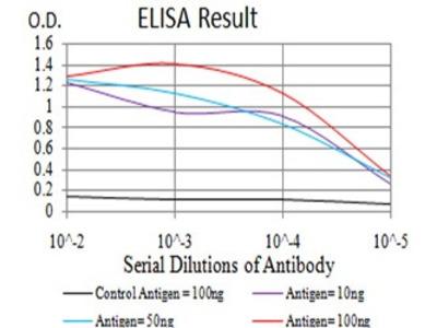 Mouse Anti-CGB Antibody