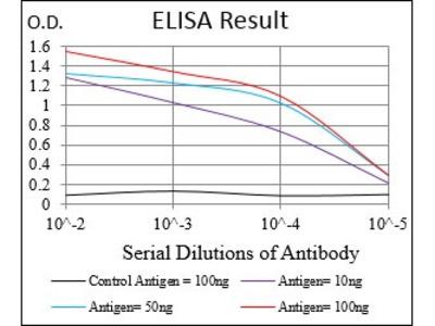 Mouse Anti-DAPK3 Antibody