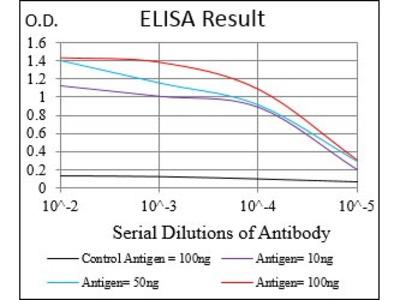 Mouse Anti-PRKACA Antibody
