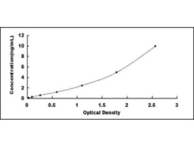 DPT ELISA Kit (Human) (OKCD02504)