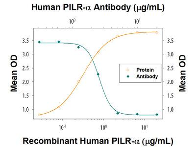 Human PILR-alpha Antibody