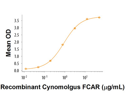 Recombinant Cynomolgus Monkey FCAR / CD89 Protein, CF