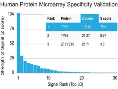 p53 Antibody / TP53 (Protein Microarray-Validated Monoclonal)