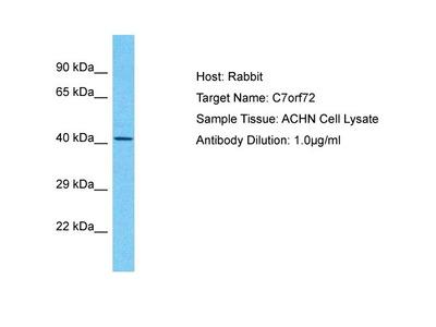 C7orf72 Polyclonal Antibody