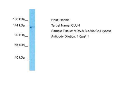 CLUH Polyclonal Antibody