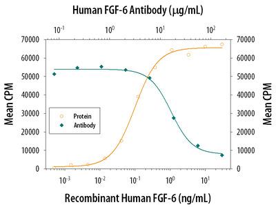 FGF-6 Antibody