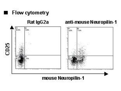 Anti-Neuropilin-1 (CD304) (Mouse) mAb-Alexa Fluor 647