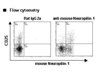 Anti-Neuropilin-1 (CD304) (Mouse) mAb-Alexa Fluor 488