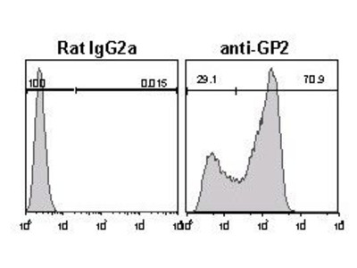 Anti-GP2 (Glycoprotein 2) (Mouse) mAb