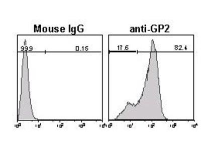 Anti-GP2 (Glycoprotein 2) (Human) mAb