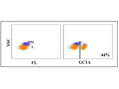 CD4 Antibody (GC1A)