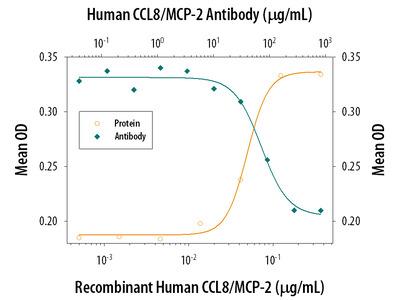 CCL8 /MCP-2 Antibody