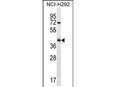 ARRDC5 Polyclonal Antibody