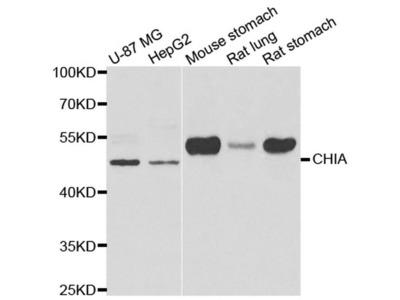 CHIA Antibody
