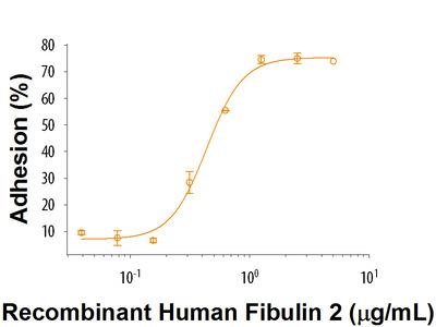 Recombinant Human Fibulin 2 Protein, CF