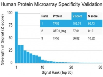 p53 Antibody / N-Terminal Region (Protein Microarray-Validated Monoclonal)
