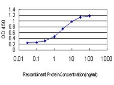 ZNF345 Monoclonal Antibody