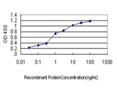 UBB / Ubiquitin B Monoclonal Antibody