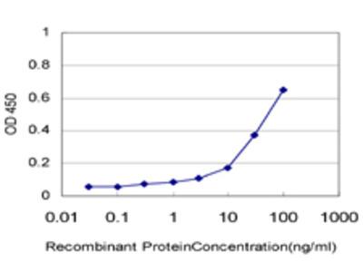 MACS / RIN2 Monoclonal Antibody