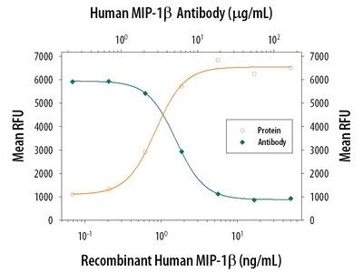 CCL4 /MIP-1 beta Antibody