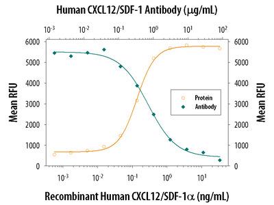 CXCL12 /SDF-1 Antibody