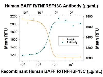 BAFF R / TNFRSF13C Antibody