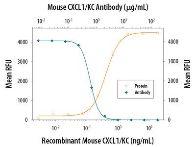 CXCL1 /GRO alpha /KC /CINC-1 Antibody