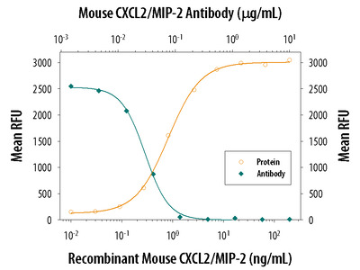 CXCL2 /GRO beta /MIP-2 /CINC-3 Antibody
